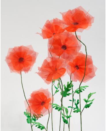Gardering - poppy