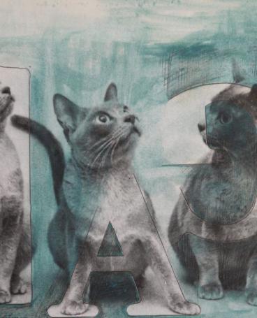grey cats